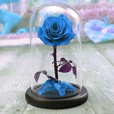 15 cm Cam Fanusta Solmayan Gri Mavi Gül