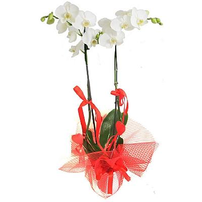 2 Dallı Sevgililere Özel Beyaz Orkide