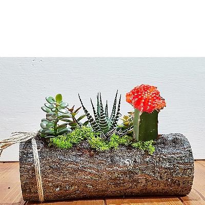 Ahşap Kütükte Bitki ve Kaktüs Arajmanı