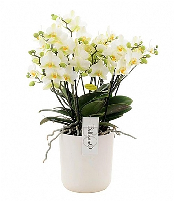 Seramikte 10 Dal Beyaz Orkide