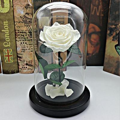 20 cm Cam Fanusta Solmayan Beyaz Gül