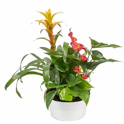 Tropik Bitki Arajmanı Üçlü