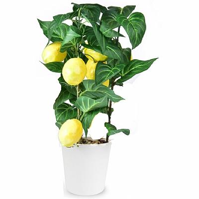 Minik Limon Agaci 30 cm