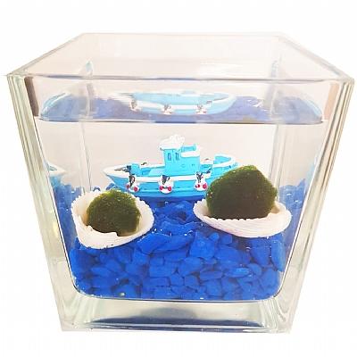Deniz Temali Sans Getiren Marimo