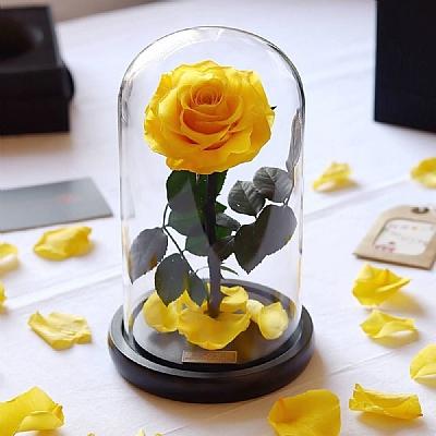 20 cm Cam Fanusta Solmayan Sarı Gül